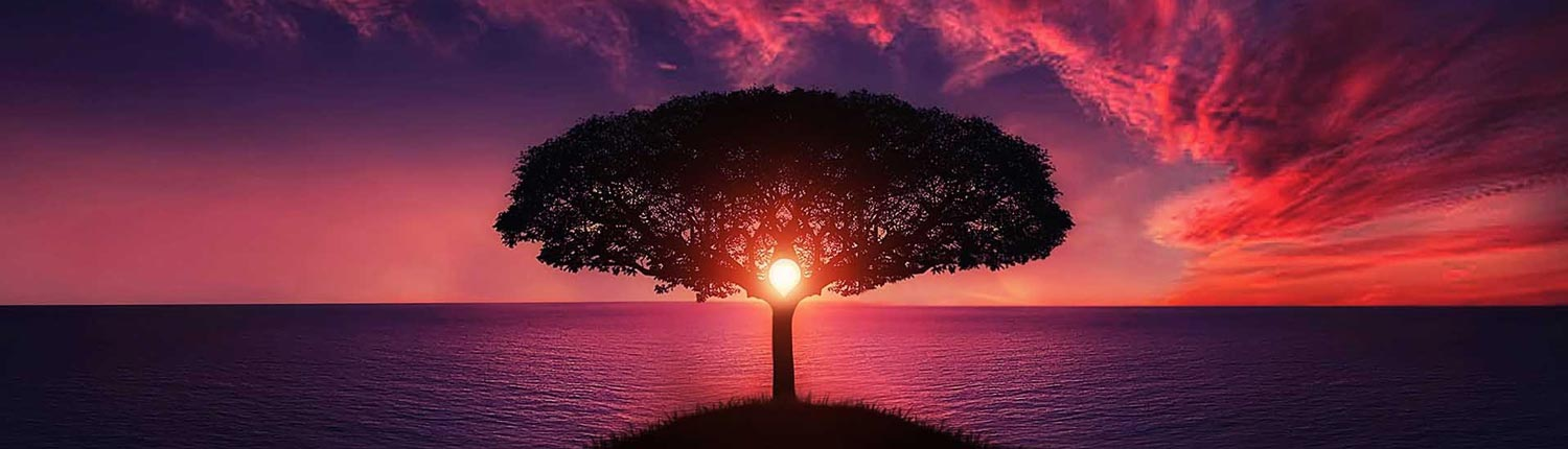 pink sunset over the ocean with a tree - nature therapy